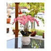 Picture of Yatai Luxury Silk Artificial Potted Orchid Flowers, Pink