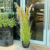 Yatai Artificial Grass Plant with Natural Dry Pampas Grass Flowers Online Shopping